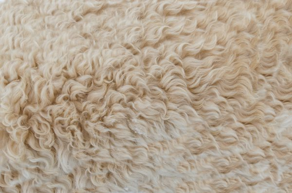Woonplaids